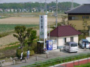江戸川サイクリング 葛飾橋・市川橋間