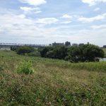 江戸川 武蔵野線・運河間 サイクリング