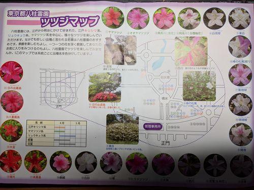 八柱霊園では21種類のツツジを鑑賞できるって知ってました?