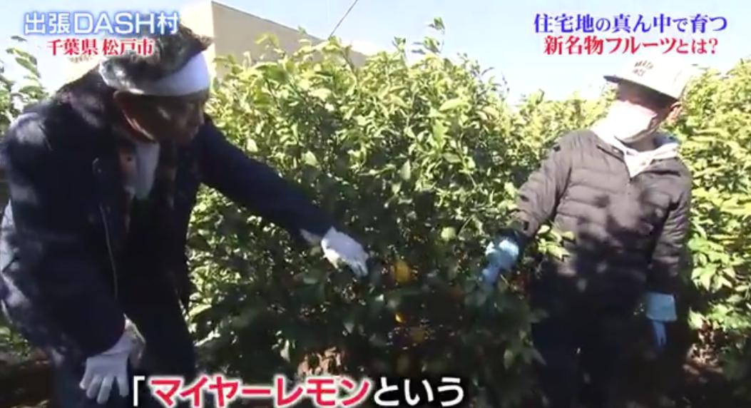 「ザ!鉄腕!DASH!!」の出張DASH村で新松戸の鵜殿シトラスファームのレモンを紹介