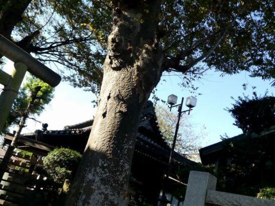 矢切神社(松戸市下矢切)